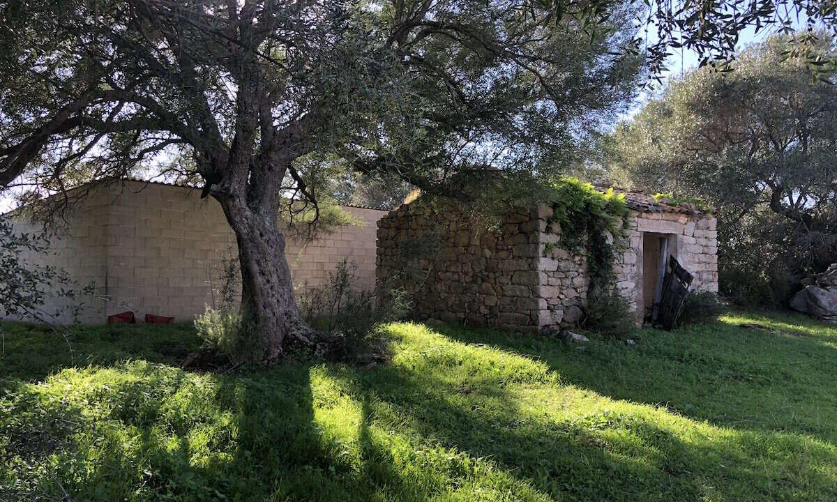 vendita_terreno_agricolo_stazzo_nord_sardegna_1
