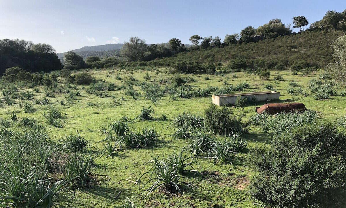 vendita_terreno_agricolo_stazzo_nord_sardegna_2